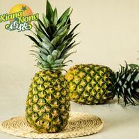 【香侬果品】菲律宾 进口 新鲜水果 凤梨 无眼菠萝1个约3斤