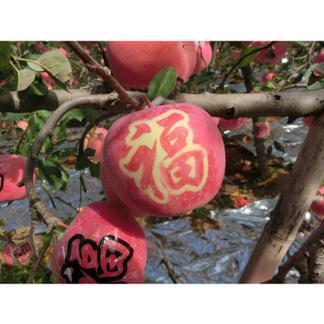 【尊贵专享】唐人庄园  艺术苹果 心意祝福